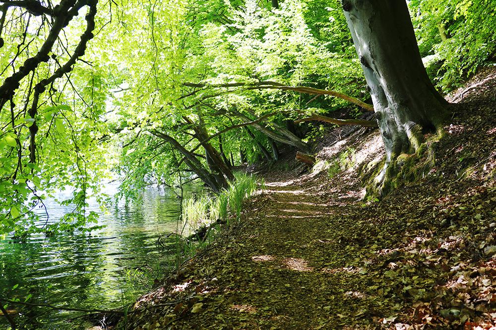 Feldberger Seenlandschaft 01